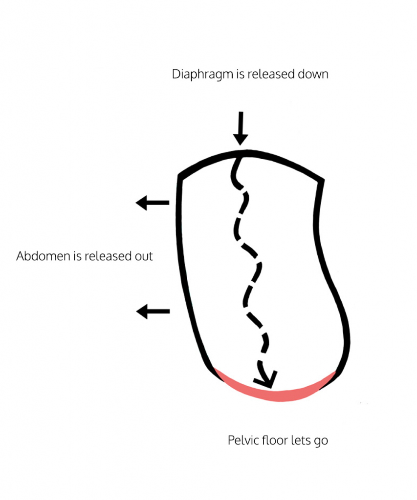 pelvic floor muscle release: DIAPHRAGM position of release